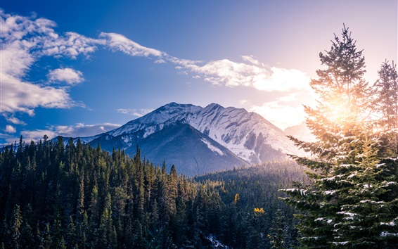 Обои Национальный парк Банф, Канада, горы, лес, деревья, закат