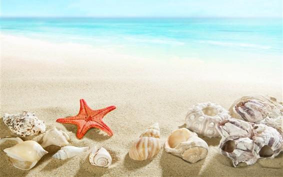Wallpaper Beach, seashell, starfish, sea