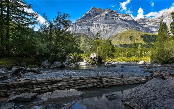 Wallpaper Bernese Alps, forest, river, stones
