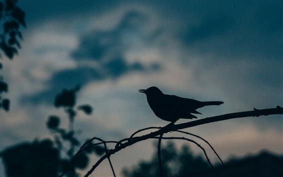 Papéis de Parede Pássaro, silhueta, crepúsculo