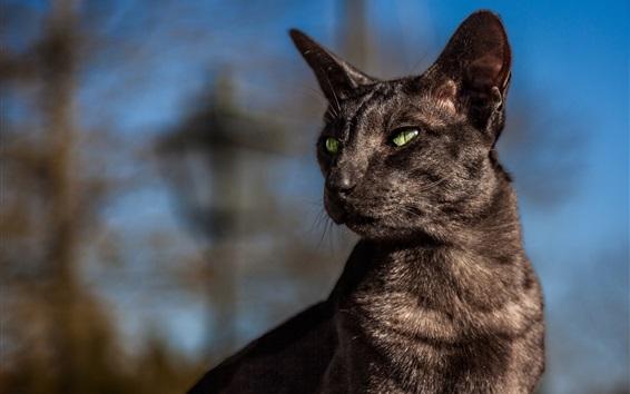 Обои Черная кошка смотрит на сторону
