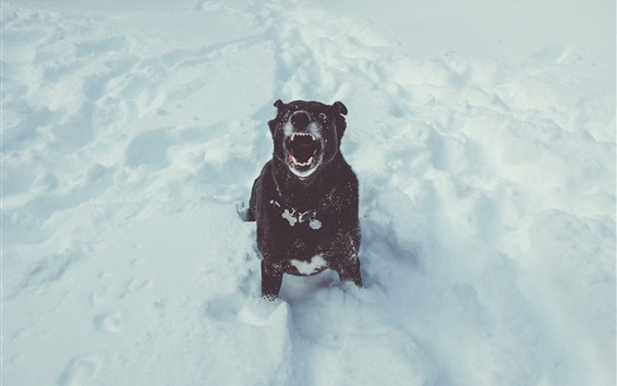 Wallpaper Black dog open mouth, winter, snow