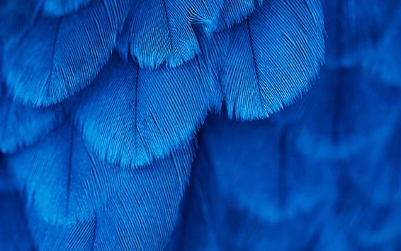Обои Синяя текстура перьев