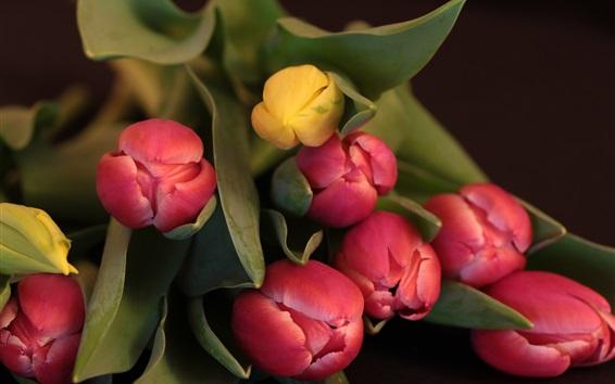 Papéis de Parede Bouquet, tulipas, vermelho e amarelo