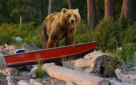 Papéis de Parede Urso marrom no barco