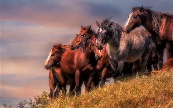 Papéis de Parede Cavalos de cor marrom, grama, vento