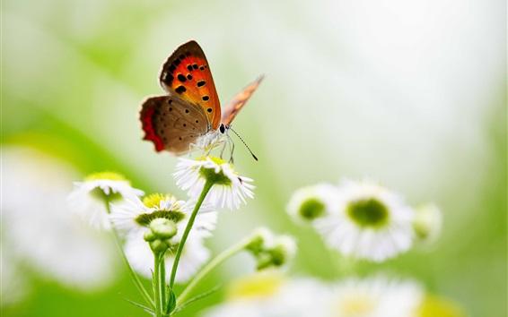 Wallpaper Butterfly, white flowers, bokeh