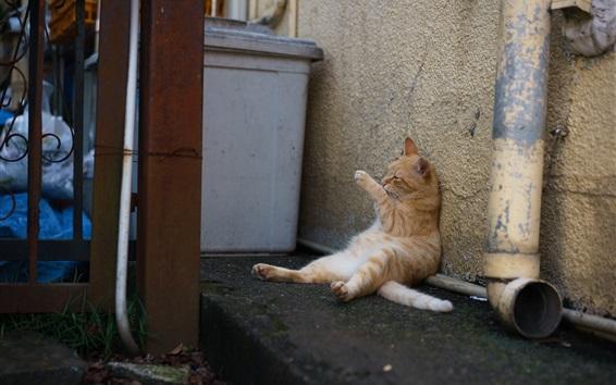 Wallpaper Cat wash paw