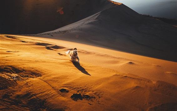 Wallpaper Desert, sand, dog running