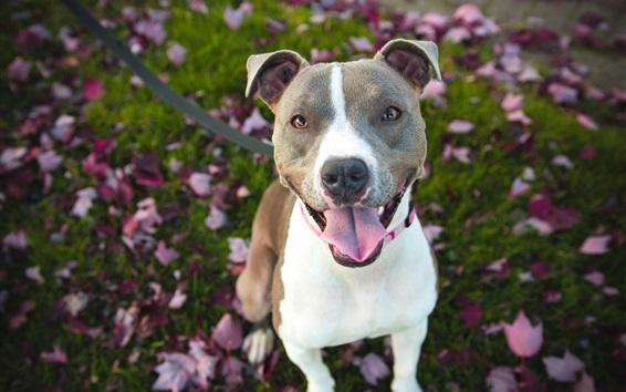 Papéis de Parede Visão frontal do cão, animal de estimação
