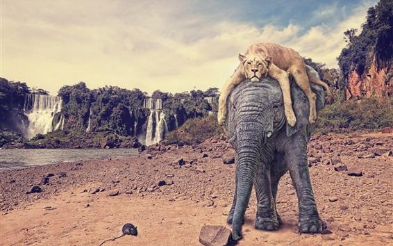 Papéis de Parede Elefante e tigre, cachoeira