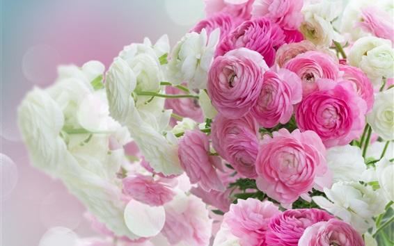 Fonds D 233 Cran Gros Plan De Fleurs Pivoines Roses Et