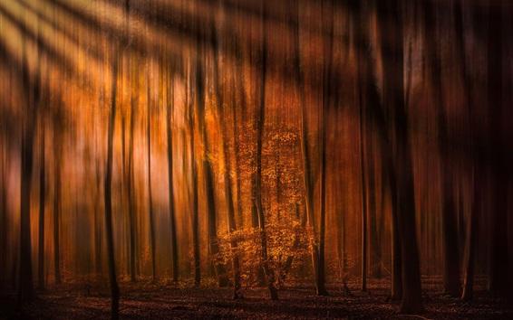 Обои Лес, осень, солнечные лучи