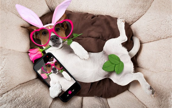 Wallpaper Funny dog, glasses, rabbit ears
