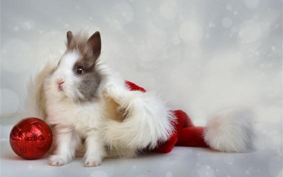 Wallpaper Furry rabbit, hat, ball