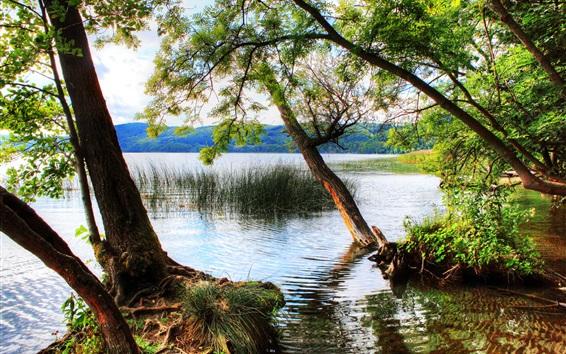 Обои Германия, деревья, река, лес, трава