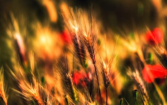 Wallpaper Grass, meadow, blurry