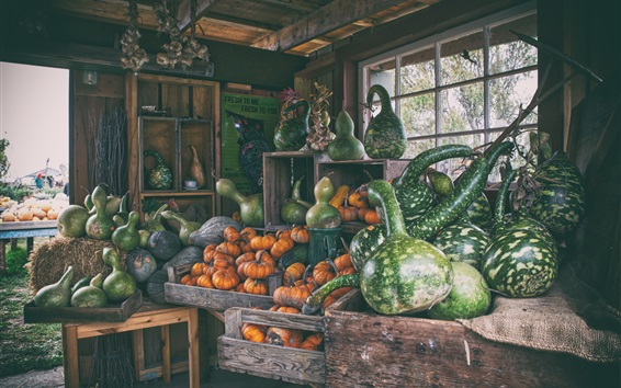 Wallpaper Harvest, pumpkin, farm