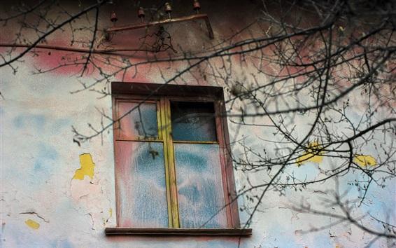 Wallpaper House, window, wall, twigs