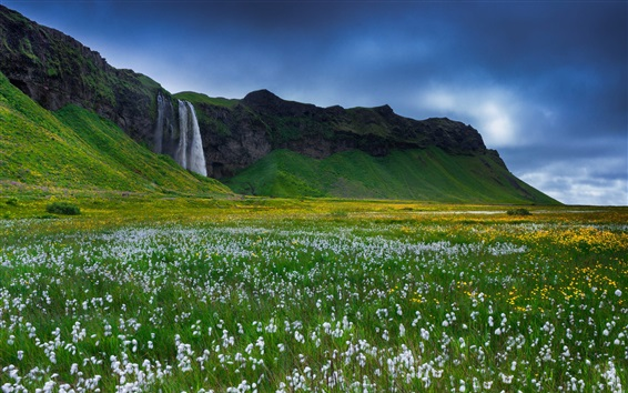 Wallpaper Iceland, beautiful waterfall, wildflowers
