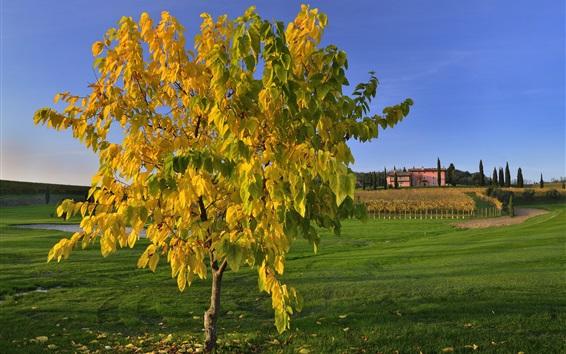 Wallpaper Italy, Tuscany, single tree, grass, autumn