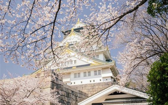 Papéis de Parede Japão, Parque do Castelo de Osaka, templo, flor de sakura, primavera