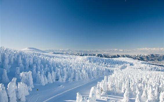 Обои Япония, Ямагата, снег, деревья, зима