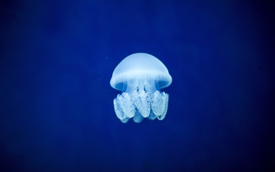 Wallpaper Jellyfish, blue sea underwater