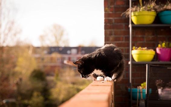 Wallpaper Kitten look down, balcony