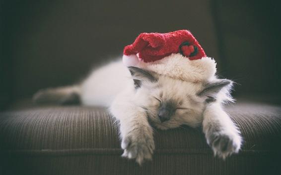 Обои Котенок спать, шляпа, пушистый