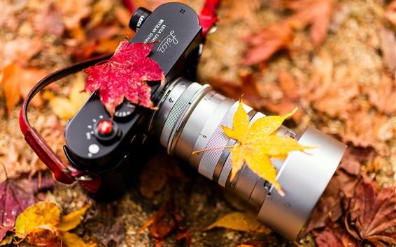 壁紙 ライカカメラ、レンズ、葉、秋
