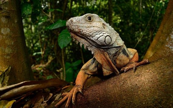 Wallpaper Lizard, trees, forest
