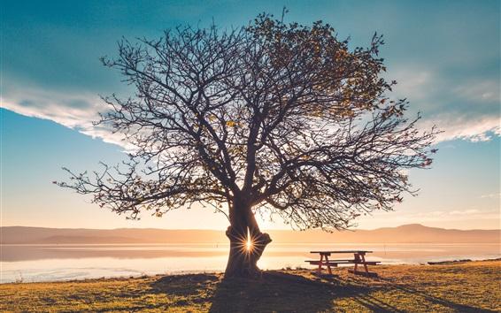 Обои Одинокое дерево, скамейка, трава, река, закат, блики
