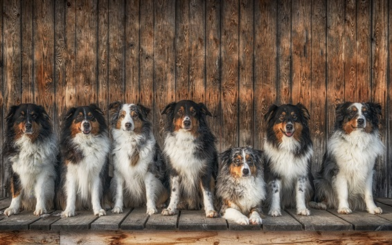 Wallpaper Lot of dogs sit in a line