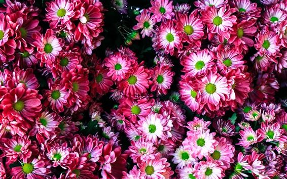 Fond d'écran Beaucoup de fleurs roses, beau fond
