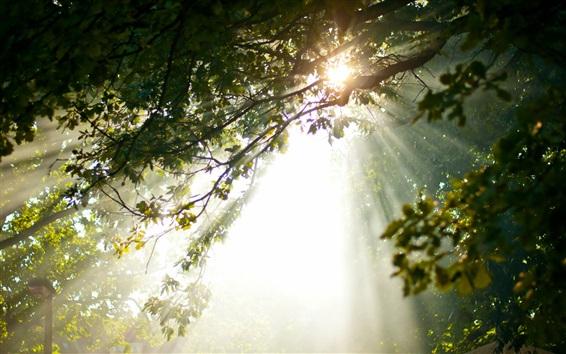 Wallpaper Morning, tree top, sun rays, glare
