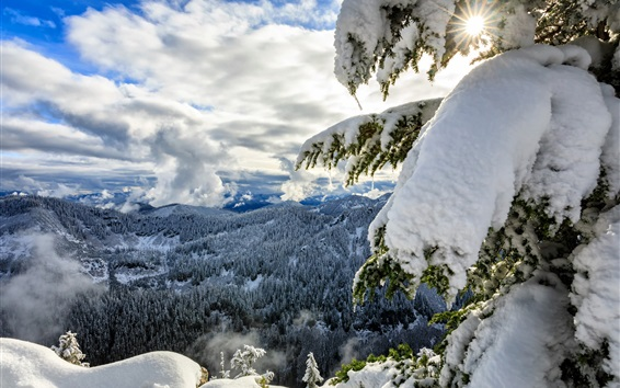 Wallpaper Okanogan-Wenatchee National Forest, Cascade Range, thick snow, trees, winter