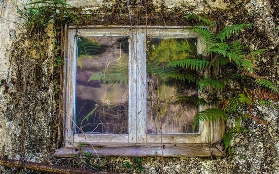 Обои Окно старого дома, папоротник