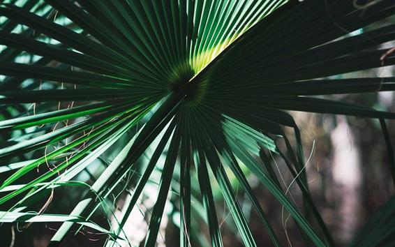 Обои пальмовые листья