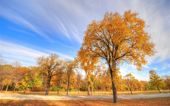 Wallpaper Park in autumn, trees, sky