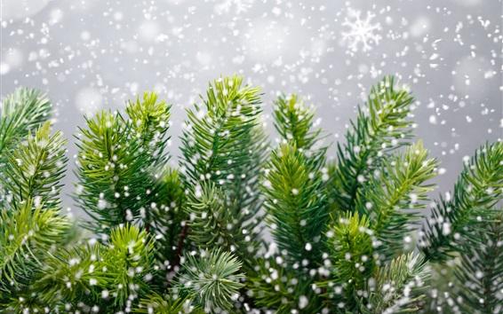 Wallpaper Pine tree, snowflakes, winter