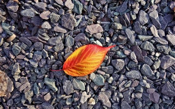 Wallpaper Red orange leaf, stones