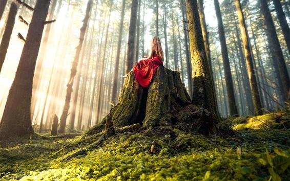 배경 화면 빨간색 스커트 소녀 앉아 그 루터 기, 숲