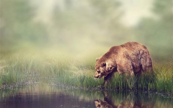 Papéis de Parede Lado do rio, grama, nevoeiro, urso marrom