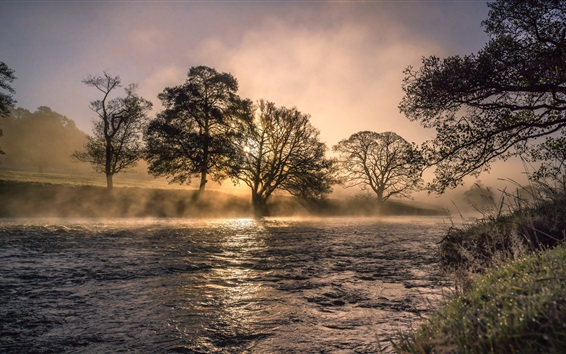 Papéis de Parede Rio, árvores, névoa, manhã