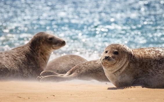 Wallpaper Sea, seal, beach