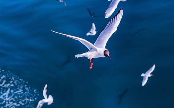 壁紙 カモメ飛行、鳥、海