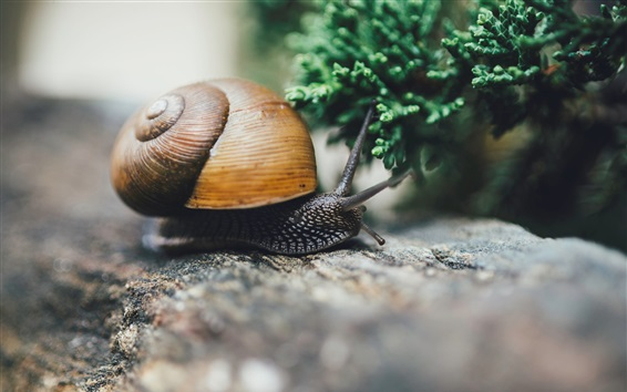 Wallpaper Snail, insect macro photography
