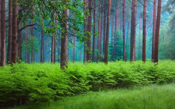 Wallpaper Spring, forest, trees, haze, green