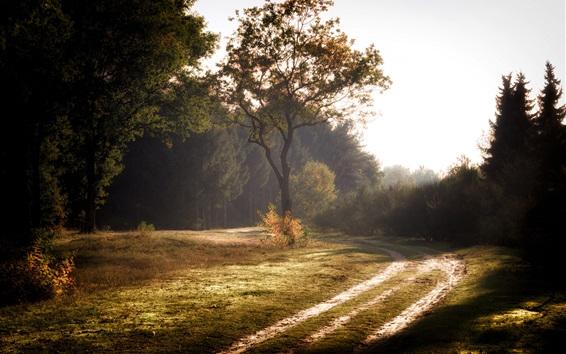 Papéis de Parede Verão, floresta, estrada, árvores, manhã, neblina